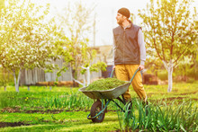 Male Gardener Is Pushing Wheel...