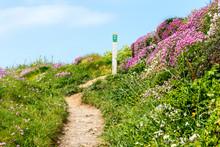Flowers On Welsh Coastl Path