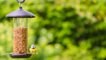 Small Bluetit Sat On Feeder Fa...