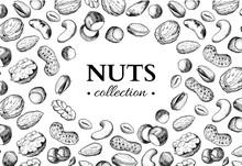 Nuts Vector Vintage Frame Illu...