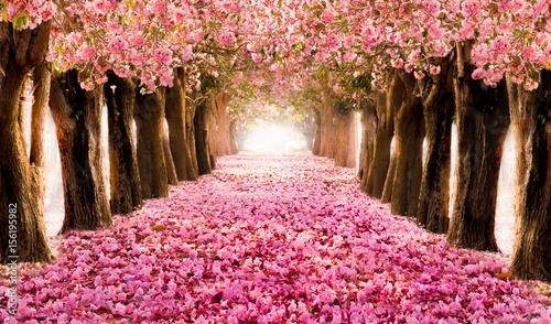 Fototapeta drzewa   zadrzewiona-alejka-w-kwiatach