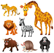 Different Types Of Jungle Animal