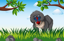 Baboon Living In The Forest