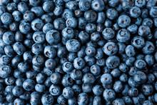 Blueberry. Fresh Organic Berri...