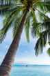 View of coconut tree with the sea on background
