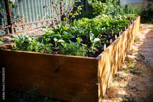 Foto op Canvas Tuin Spring green garden in a wooden box
