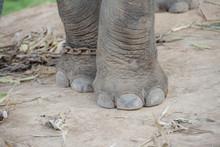 Elephant's Leg