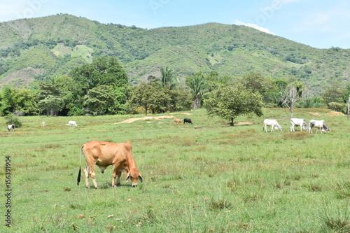 Fotografie, Obraz  en el prado un ganado