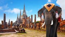 Elephant At Wat Phra Si Sanphe...