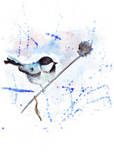 Different Colorful Birds Of Different Breeds: Chickadee, Hummingbirds, Parrots And Other