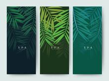 Branding Packaging Palm Coconut Bamboo Tree Leaf Nature Background, Logo Banner Voucher, Spring Summer Tropical, Vector Illustration