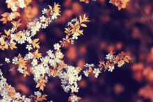 Toned Background Spring Tree Branches With Young Leaves Sun Glare Blur Bokeh