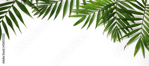 Spoed Foto op Canvas Palm boom beautiful palm leaves