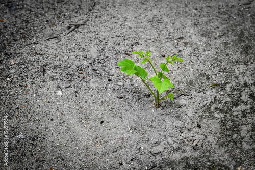 Photo  a new beginning young plant grow in a dry soil