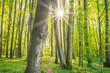Sonnenstrahlen im grünen Wald