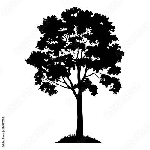 klonowe-drzewo-z-lisci-i-trawa-czarna-sylwetka