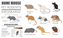 Mice Breeds Icon Set Flat Styl...