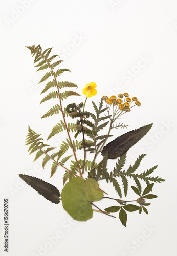Fototapety, obrazy: Dried leaves of fern, tansy, Buttercup, clover, sage, foalfoot