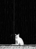 Black and white photo of a cat near a wall - 156671594