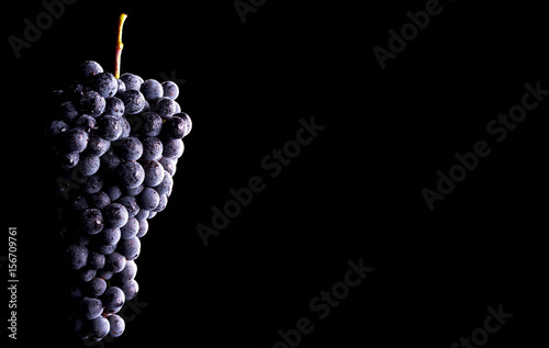 Fototapeta Berries of dark bunch of grape  in low light isolated on black background obraz