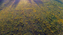Buttercup Meadow From The Air....