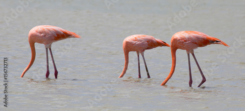Aluminium Prints Flamingo Flamingos in der Karibik (Curacao)