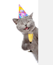 Happy Cat In Birthday Hat Hold...