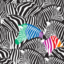 Black And Colorful Zebra Seaml...