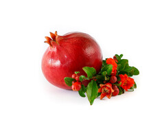 Ripe Pomegranate Fruit And Flowering Branch Of Pomegranate Tree Isolated On White Background.
