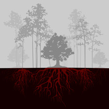 Split Illustration With Trees And Red Roots. Fog In Forest