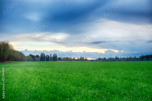 Deurstickers Groene A field strewn with grass and forest. Summer landscape