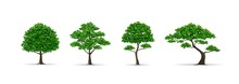 Tree Set Realistic Vector Illu...