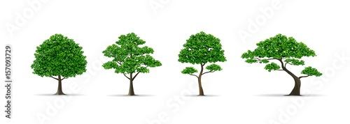 Fotomural tree set realistic vector illustration