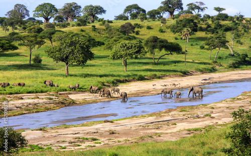 Tuinposter Afrika Elephants crossing the river in Serengeti National Park, Tanzania, Africa