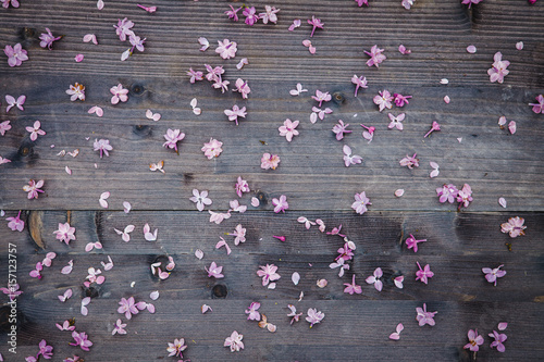 Fotografia  Lilac flowers on a wooden background