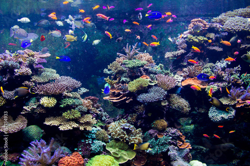 Photo Stands Coral reefs SEA Aquarium Reef Tank