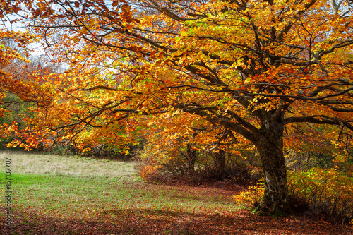Foto op Canvas Herfst Colorful autumn in the forest of Canfaito park, Italy