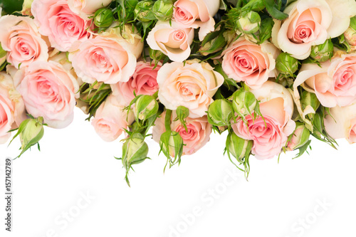 Wall Murals Floral Pink blooming fresh roses with buds and green leaves border isolated on white background