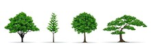Tree Set Realistic Vector Illu...