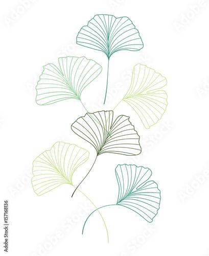 liscie-milorzebu-japonskiego-w-odcieniach-zieleni