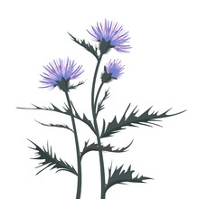 Thistle With Leaves