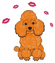 Poodle, Dog, Puppy, Cartoon, F...