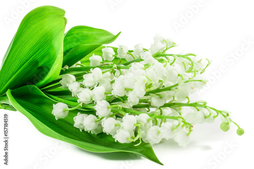 In de dag Lelietje van dalen lily of the valley flowers on white background. NAME LAT.Postcard, cover, card