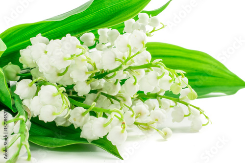 Wall Murals lily of the valley flowers on white background. NAME LAT.Postcard, cover, card