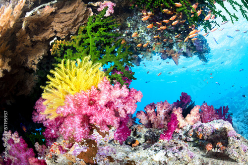 Photo sur Aluminium Sous-marin Exotic Coral Reef