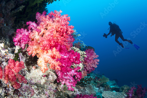 Staande foto Koraalriffen Coral reef and diver