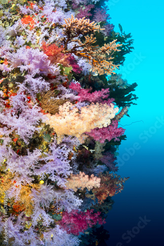 Colorful reef wall