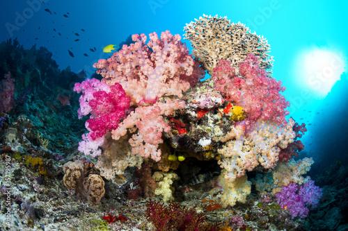 Papiers peints Recifs coralliens Vibrant coral reef