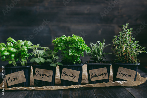 Fototapeta Fresh herbs on the wooden background with copy space obraz