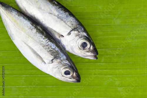 Selar crumenophthalmus ,Bigeye scad fish on banana leaves background Fototapeta